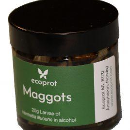 Ecoprot Giga-Maggot